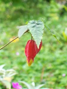 052616 flower12