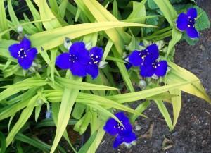 052616 flower2