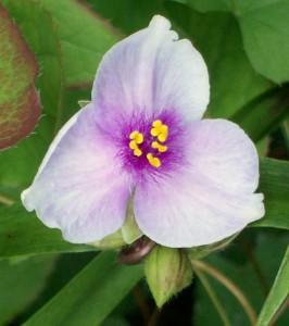 052616 flower4