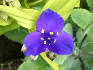 052616 flower5