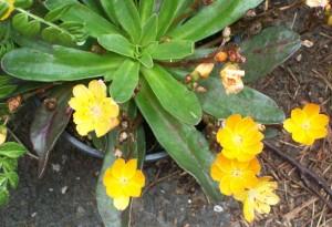 052616 flower9
