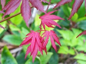 052616 leaf1