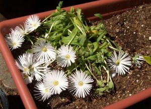 052816 Flower1