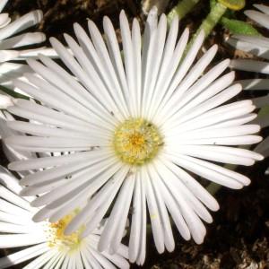 052816 Flower2
