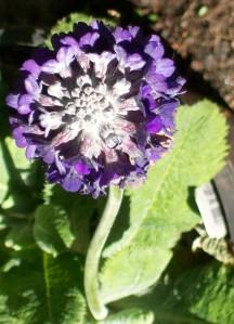 052816 Flower3