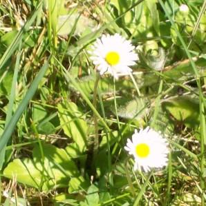 052816 Flower6