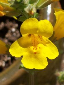 052816 Flower8