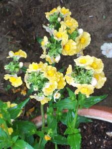 052916 flower