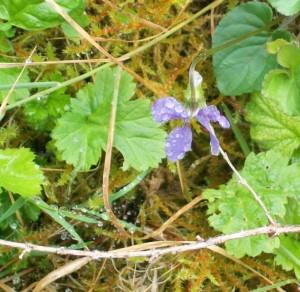 052916 violet
