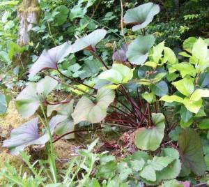 053016 plant