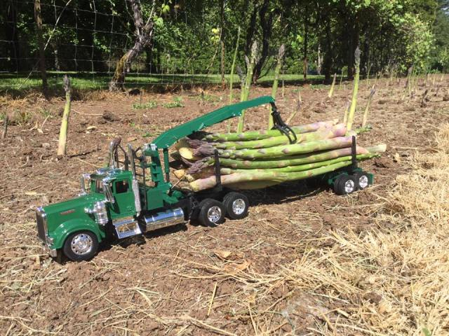 funny Another load of old growth asparagus headed for the kitchen