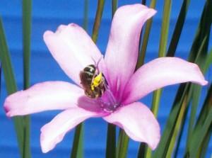 060316 Bee2