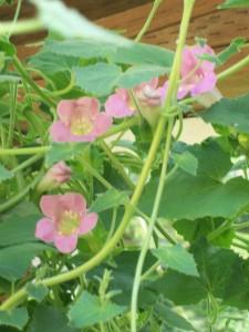 060616 flower1