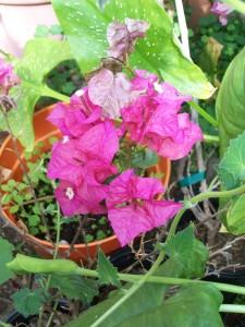 060616 flower2