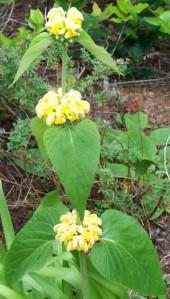 060816 flower01