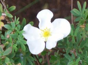 060816 flower02