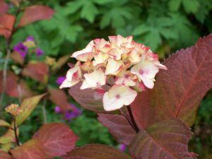 060816 flower03