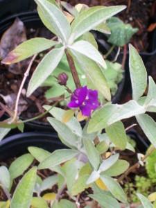 060816 flower04