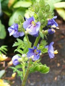 060816 flower05