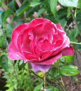 060816 flower06