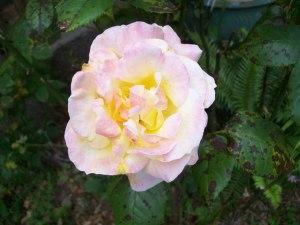 060816 flower07