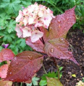 060916 Flower01