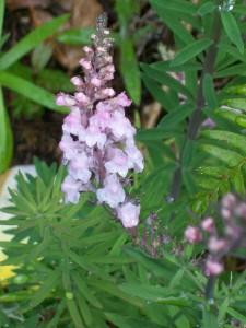 060916 Flower05