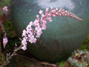 060916 Flower06