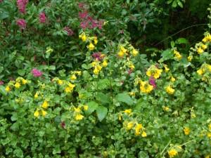 060916 Flower08