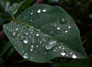 060916 Leaf