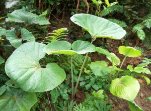 061416 Plant03