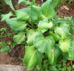 061416 Plant04