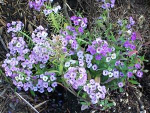 061616 flower2