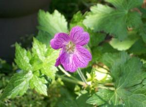 061916 flower2