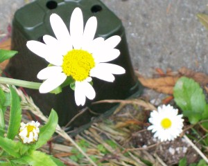 062016 Flower03