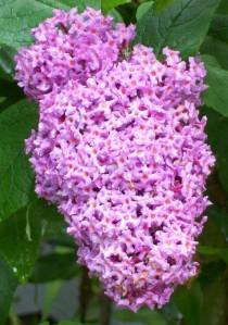 062316 Flower3