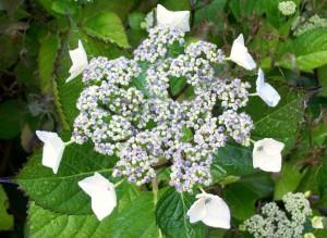 062316 Flower6
