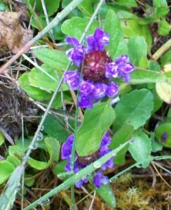 062316 Flower7