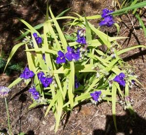 062516 Flower1