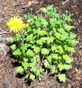 062516 Flower2