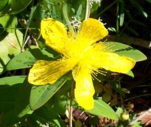 062516 Flower5