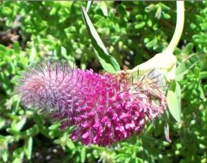 062516 Flower6