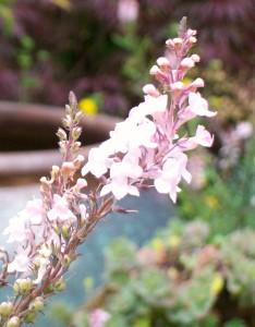 062716 Flower2