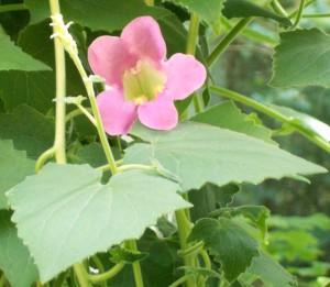 070116 flower1