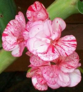 070116 Flower2