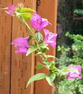 070216 Flower1