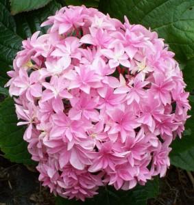 070216 Flower10