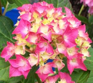 070216 Flower11
