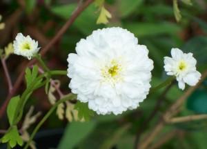 070216 Flower7