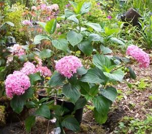 070216 Flower8